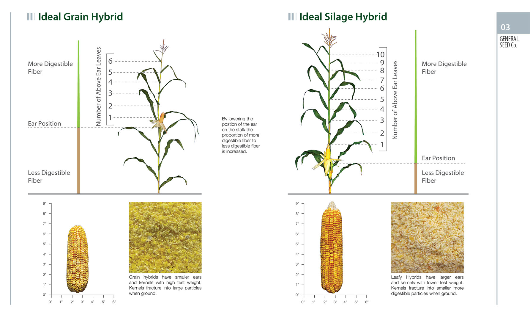 GSL Silage Hybrid general seed company